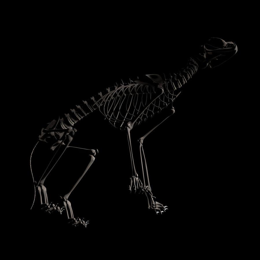 Animal Bone royalty-free 3d model - Preview no. 5