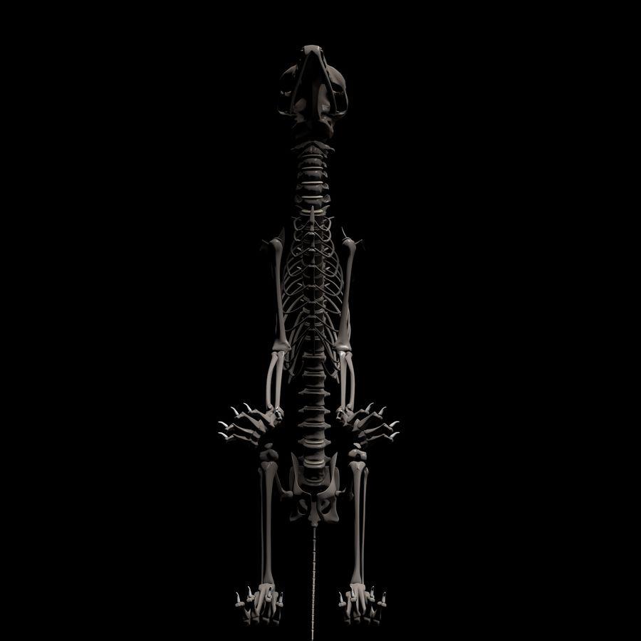 Animal Bone royalty-free 3d model - Preview no. 6
