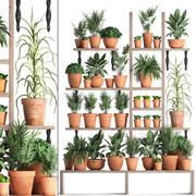 Coleta de plantas Jardinagem vertical 27 3d model