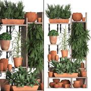 植物收集垂直园艺27 2 3d model