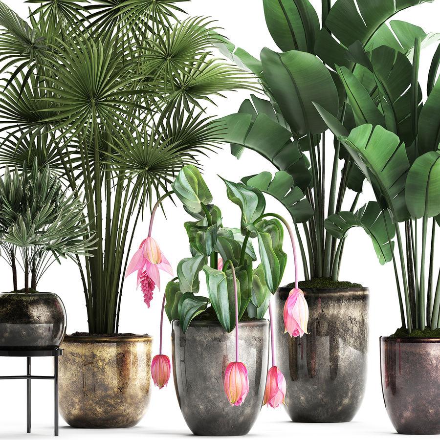 Kolekcja Rośliny egzotyczne 373 royalty-free 3d model - Preview no. 2