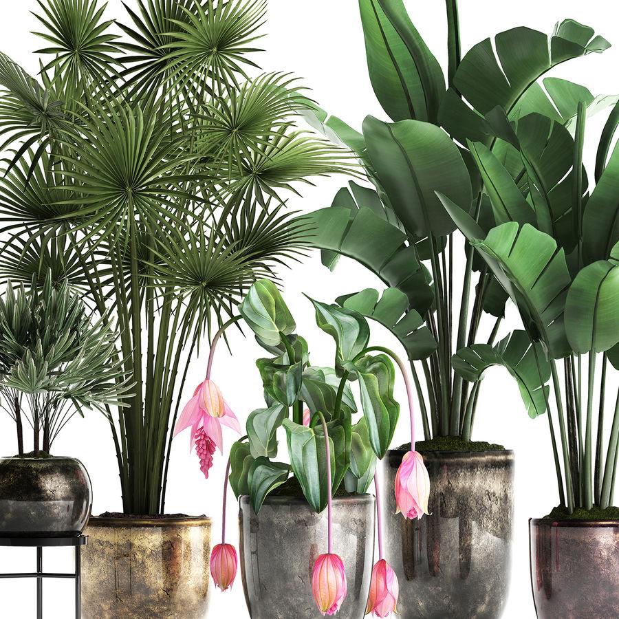 Kolekcja Rośliny egzotyczne 373 royalty-free 3d model - Preview no. 5