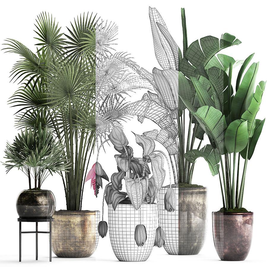 Kolekcja Rośliny egzotyczne 373 royalty-free 3d model - Preview no. 7