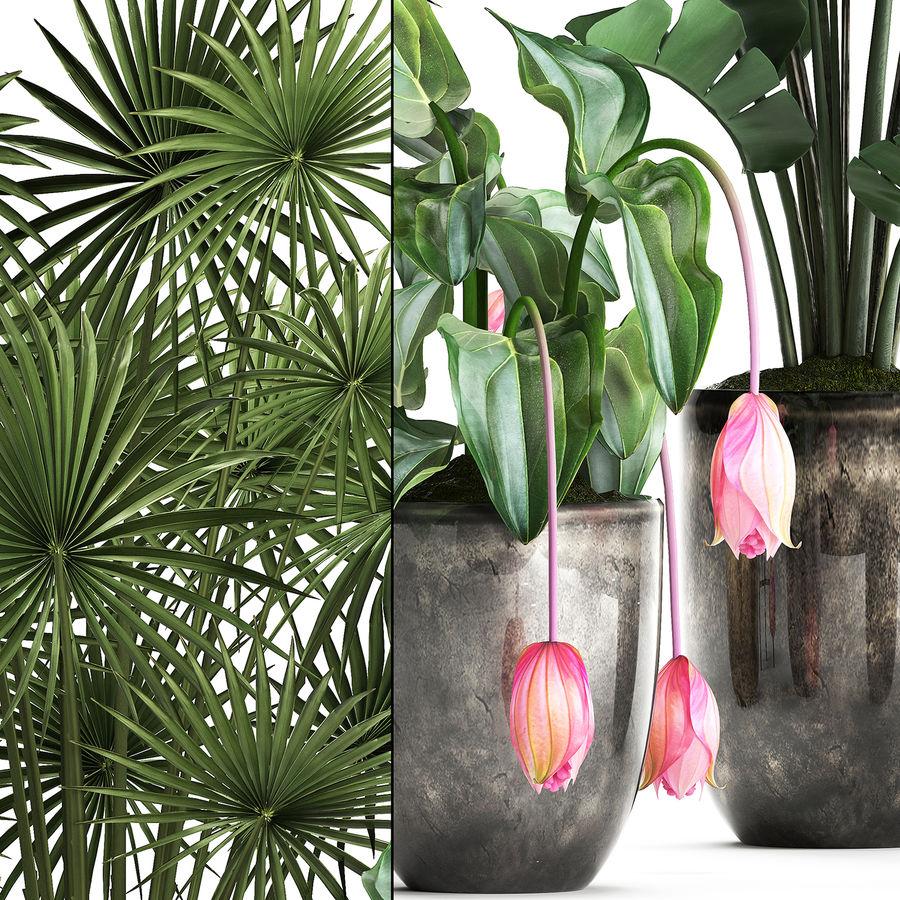 Kolekcja Rośliny egzotyczne 373 royalty-free 3d model - Preview no. 6