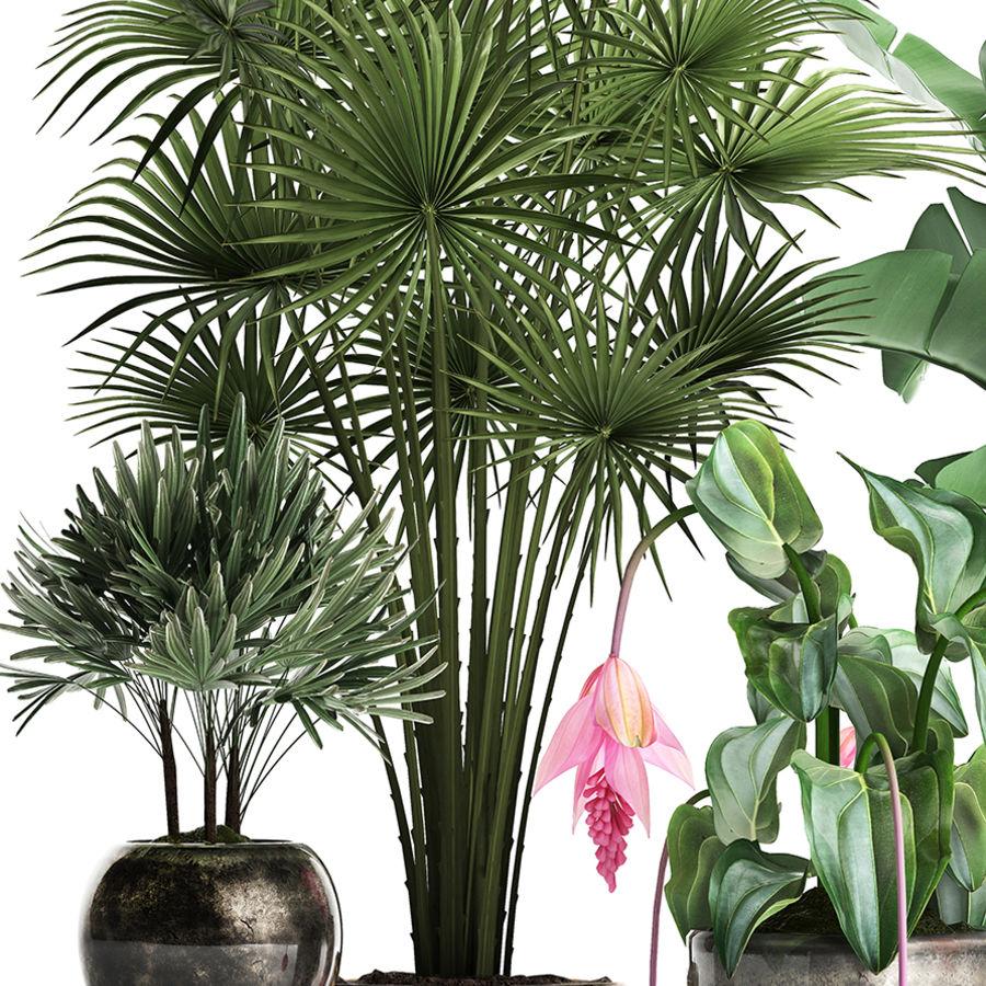 Kolekcja Rośliny egzotyczne 373 royalty-free 3d model - Preview no. 3