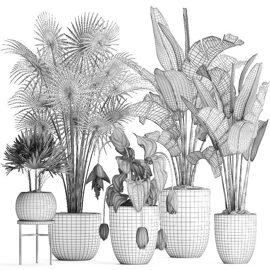 Kolekcja Rośliny egzotyczne 373 royalty-free 3d model - Preview no. 9