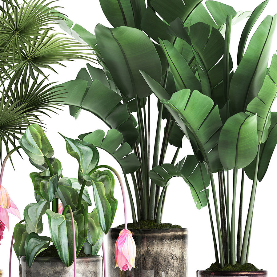 Kolekcja Rośliny egzotyczne 373 royalty-free 3d model - Preview no. 4