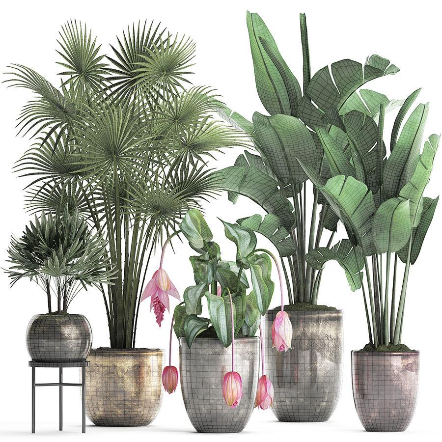 Kolekcja Rośliny egzotyczne 373 royalty-free 3d model - Preview no. 8