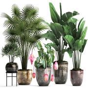Kolekcja Rośliny egzotyczne 373 3d model