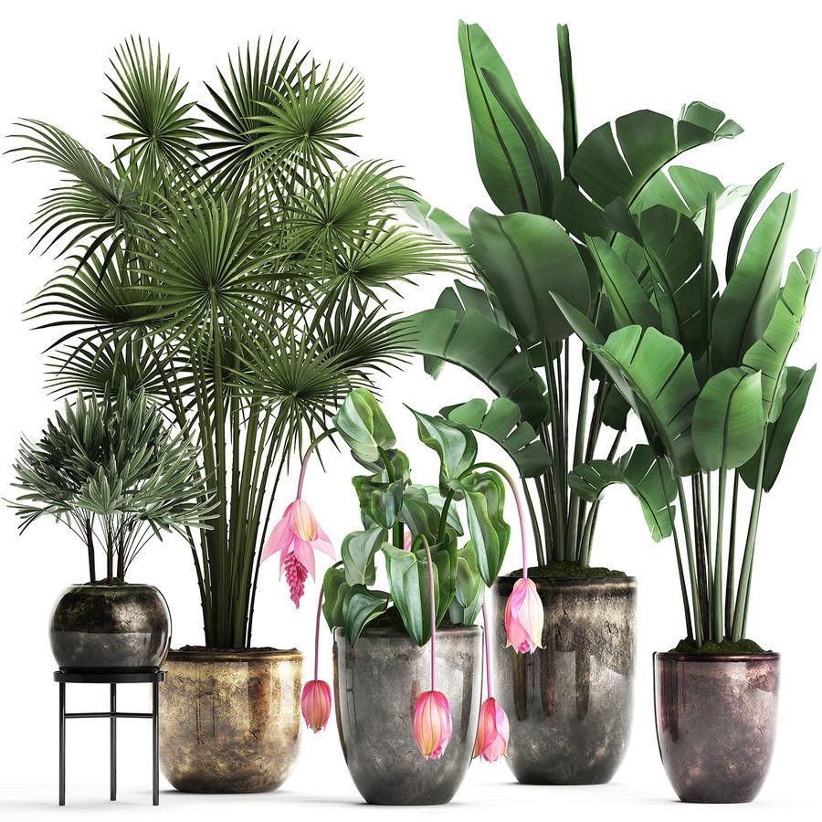 Kolekcja Rośliny egzotyczne 373 royalty-free 3d model - Preview no. 1