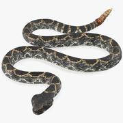 巨型黑暗响尾蛇为Cinema 4D索具 3d model