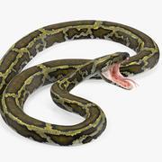 Serpent python vert gréé pour Maya 3d model