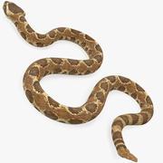 Rattlesnake Rigged pour Maya 3d model
