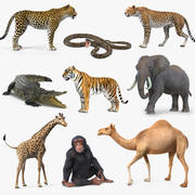 Rigged African Animals Collection 6 3d model