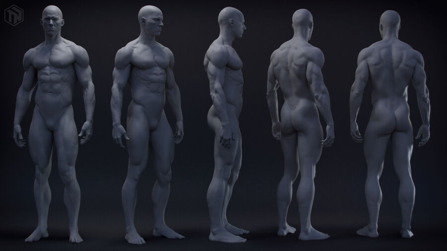 Human Anatomy Male Model royalty-free 3d model - Preview no. 3