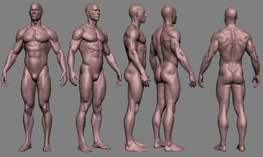 Human Anatomy Male Model royalty-free 3d model - Preview no. 4