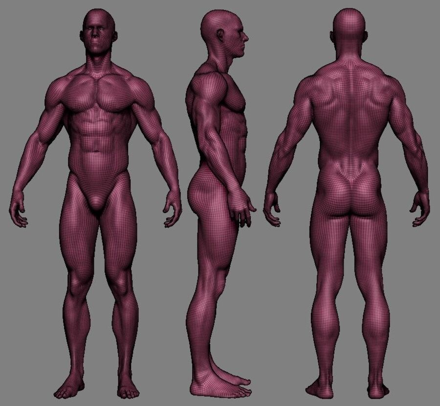 Human Anatomy Male Model royalty-free 3d model - Preview no. 5