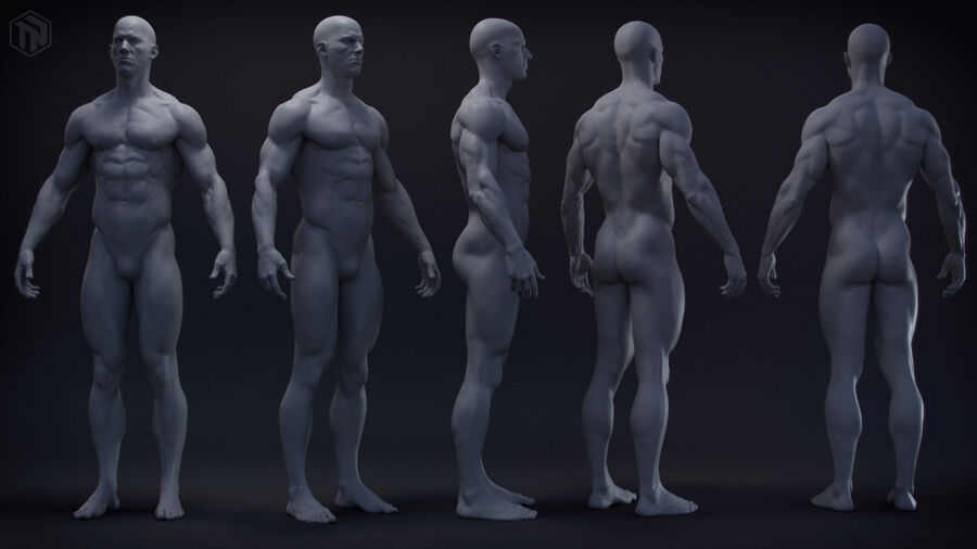 Human Anatomy Male Model royalty-free 3d model - Preview no. 2