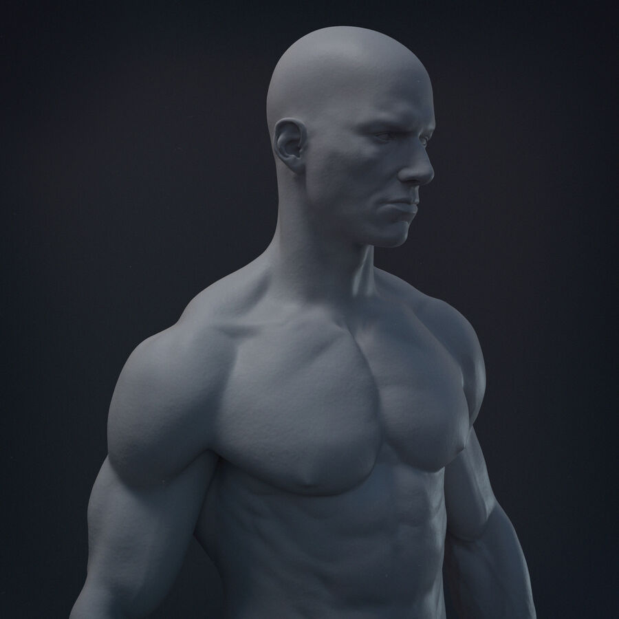 Human Anatomy Male Model royalty-free 3d model - Preview no. 1