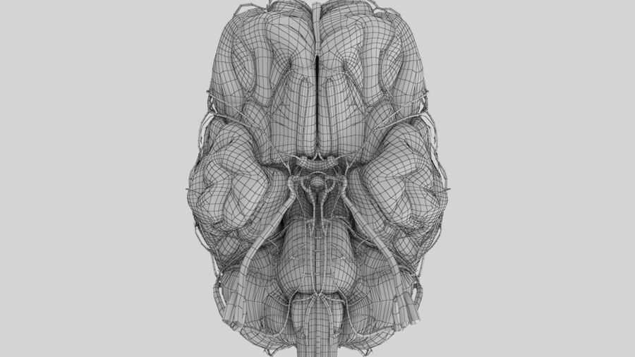 Human Brain Anatomy royalty-free 3d model - Preview no. 12
