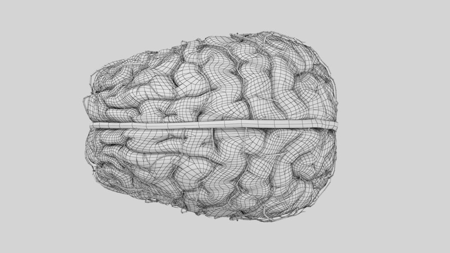 Human Brain Anatomy royalty-free 3d model - Preview no. 16