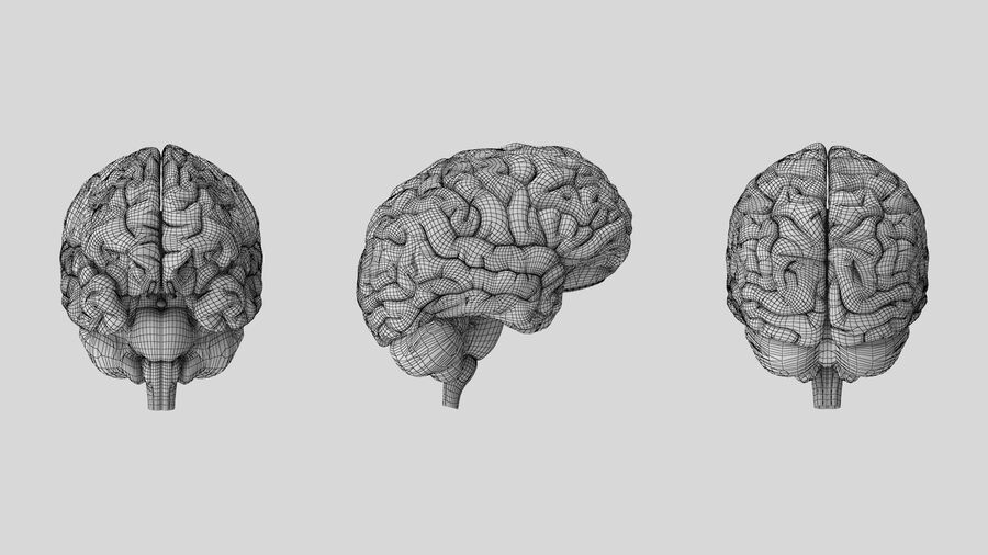Human Brain Anatomy royalty-free 3d model - Preview no. 11