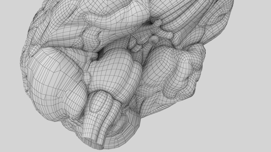 Human Brain Anatomy royalty-free 3d model - Preview no. 13
