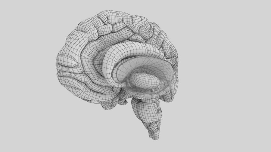 Human Brain Anatomy royalty-free 3d model - Preview no. 14