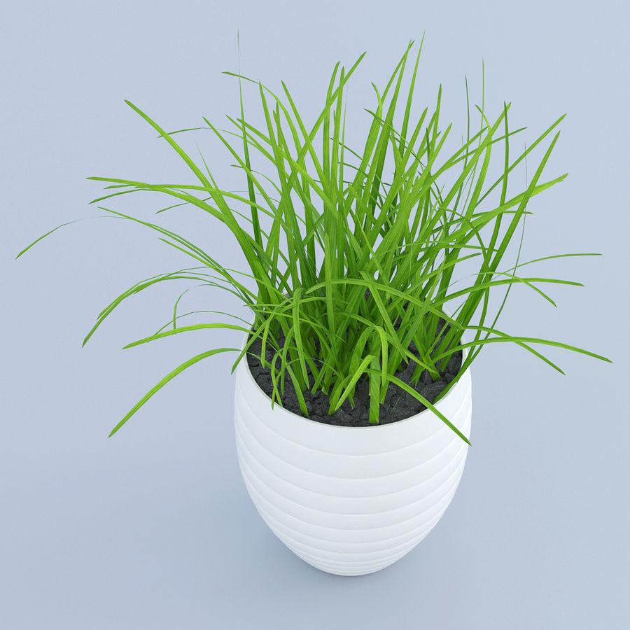 Flower Grass Pot royalty-free 3d model - Preview no. 2