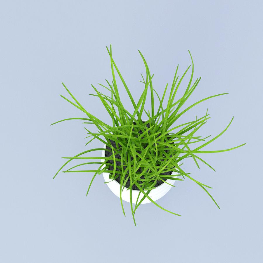Flower Grass Pot royalty-free 3d model - Preview no. 4