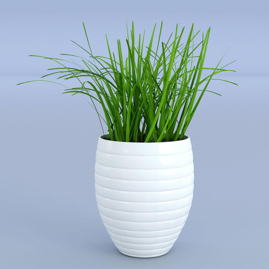 Flower Grass Pot royalty-free 3d model - Preview no. 1
