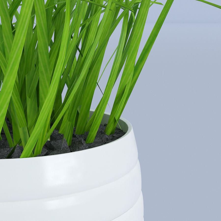 Flower Grass Pot royalty-free 3d model - Preview no. 5