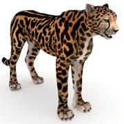 猎豹王 3d model