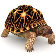 Звездная черепаха 3d model