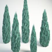 Rocky Mountain juniper Blue Arrow Juniperus scopulorum 3d model
