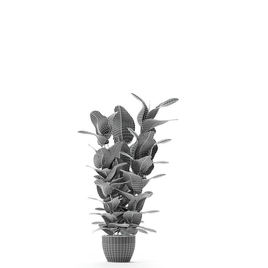 盆栽花盆中的植物异国植物 royalty-free 3d model - Preview no. 10