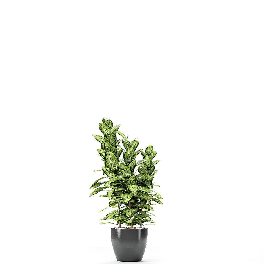 盆栽花盆中的植物异国植物 royalty-free 3d model - Preview no. 11