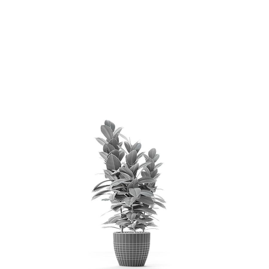 盆栽花盆中的植物异国植物 royalty-free 3d model - Preview no. 12
