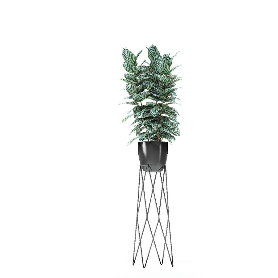 盆栽花盆中的植物异国植物 royalty-free 3d model - Preview no. 13