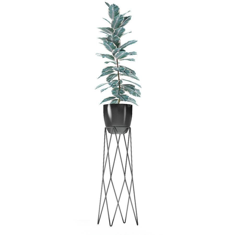 盆栽花盆中的植物异国植物 royalty-free 3d model - Preview no. 15