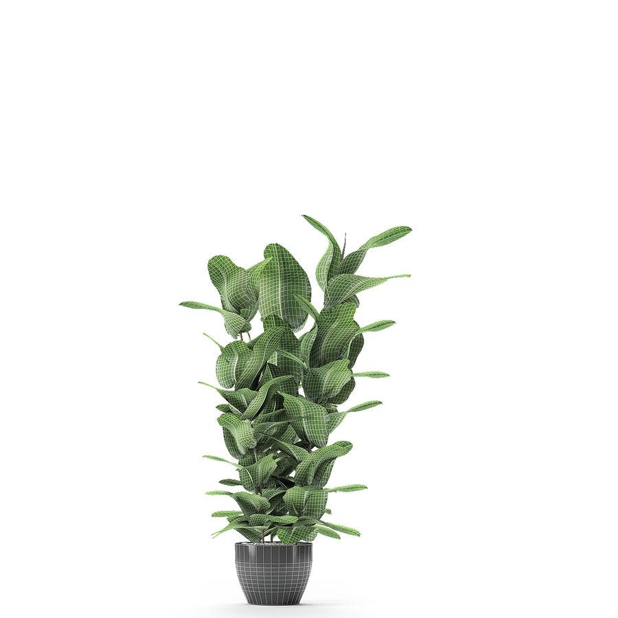盆栽花盆中的植物异国植物 royalty-free 3d model - Preview no. 20