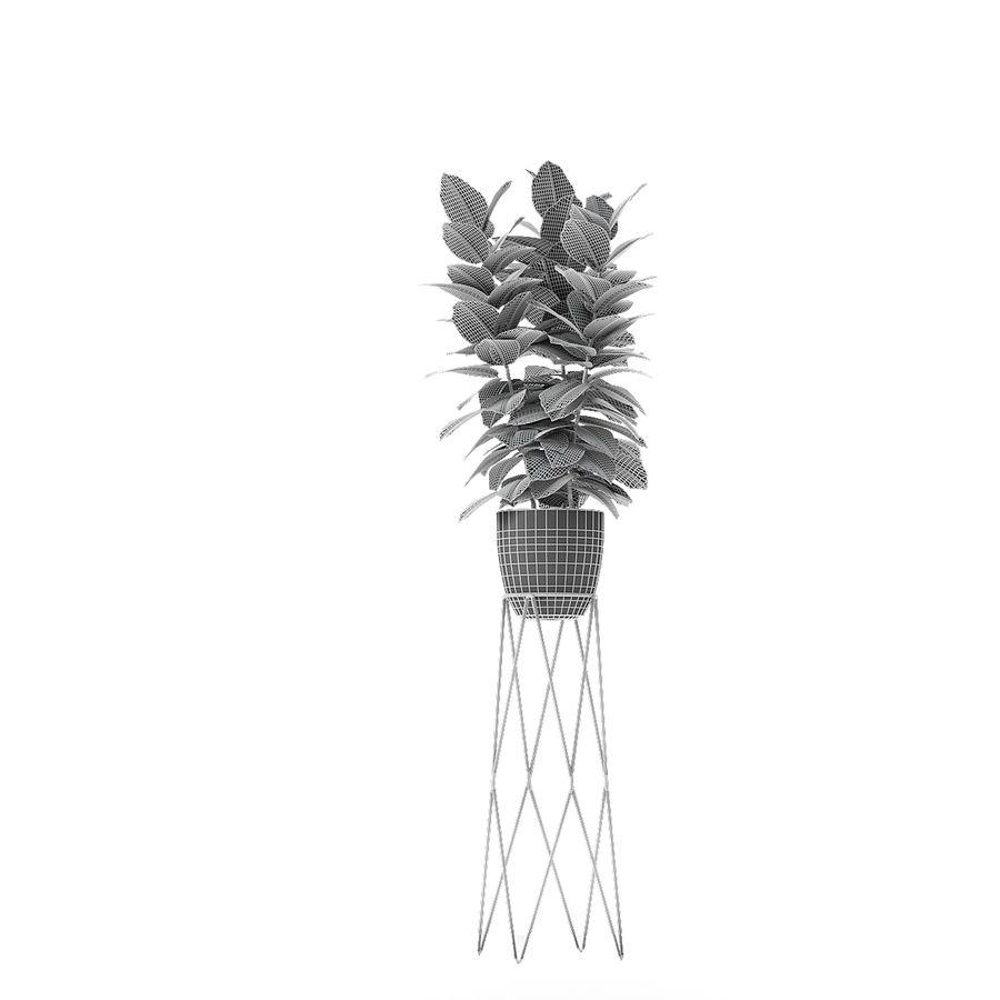 盆栽花盆中的植物异国植物 royalty-free 3d model - Preview no. 14