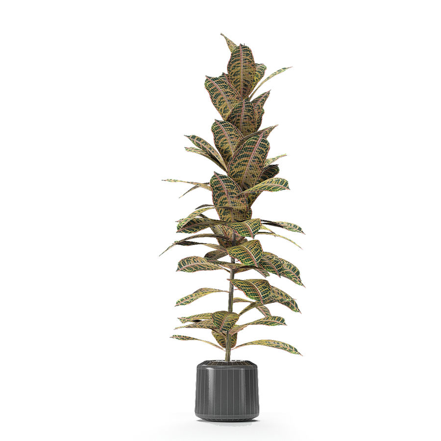 盆栽花盆中的植物异国植物 royalty-free 3d model - Preview no. 21