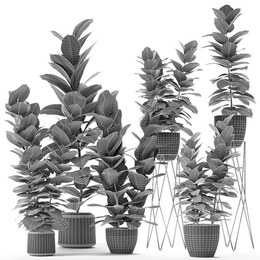 盆栽花盆中的植物异国植物 royalty-free 3d model - Preview no. 4