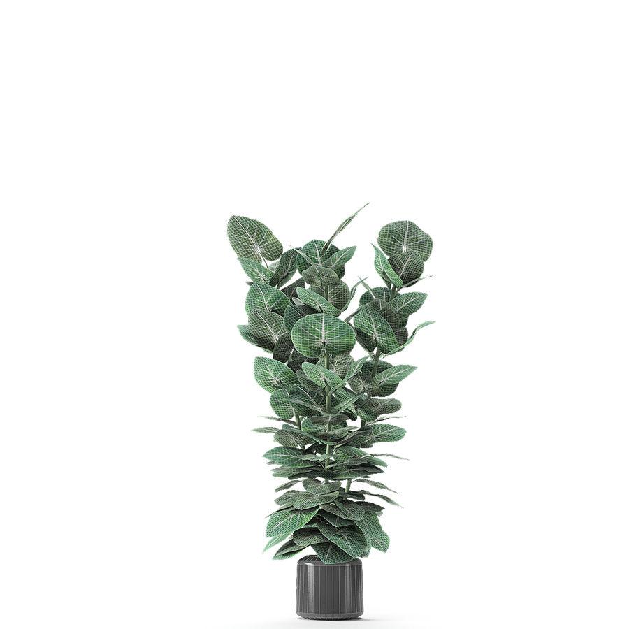 盆栽花盆中的植物异国植物 royalty-free 3d model - Preview no. 22