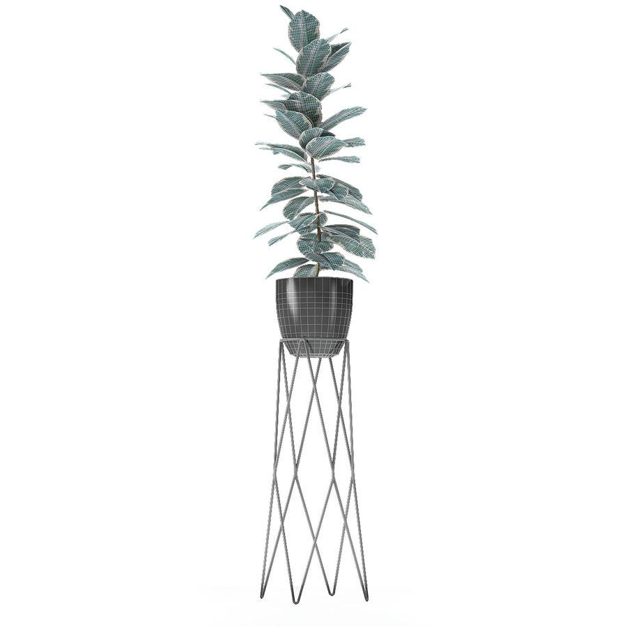 盆栽花盆中的植物异国植物 royalty-free 3d model - Preview no. 17