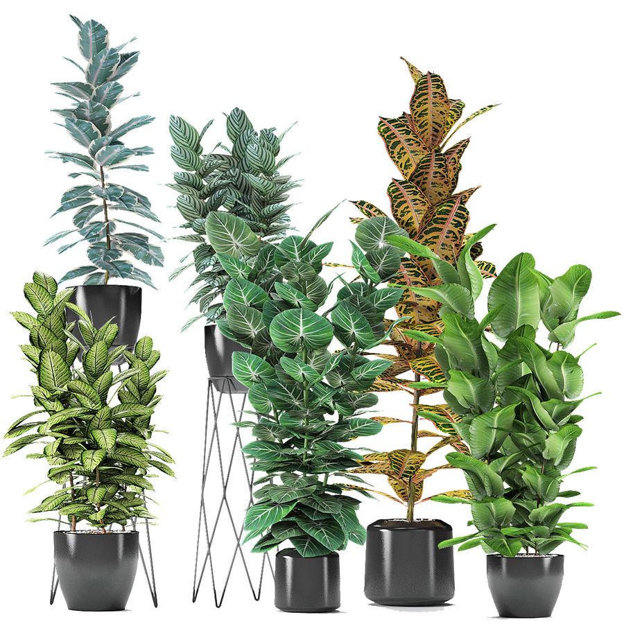 盆栽花盆中的植物异国植物 royalty-free 3d model - Preview no. 2