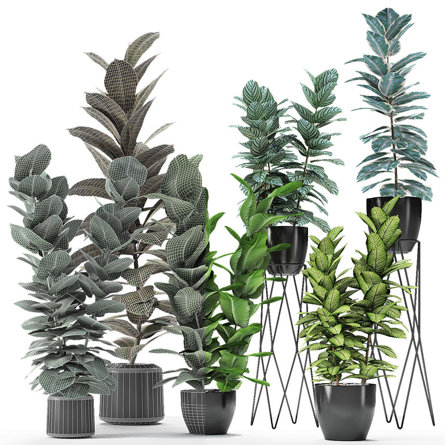 盆栽花盆中的植物异国植物 royalty-free 3d model - Preview no. 24