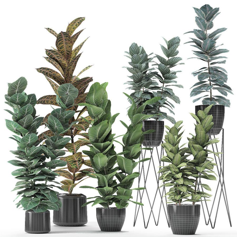 盆栽花盆中的植物异国植物 royalty-free 3d model - Preview no. 23