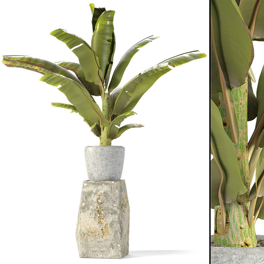 Plant in Pot Flowerpot Exotic Plant royalty-free 3d model - Preview no. 2